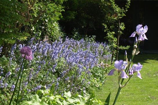 Bluebells and iris