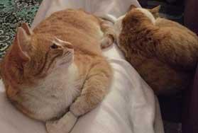 Ginger and Pumpkin