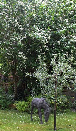 Orange blossom and pear tree