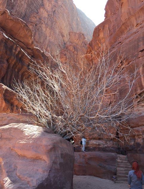 Ravine and tree