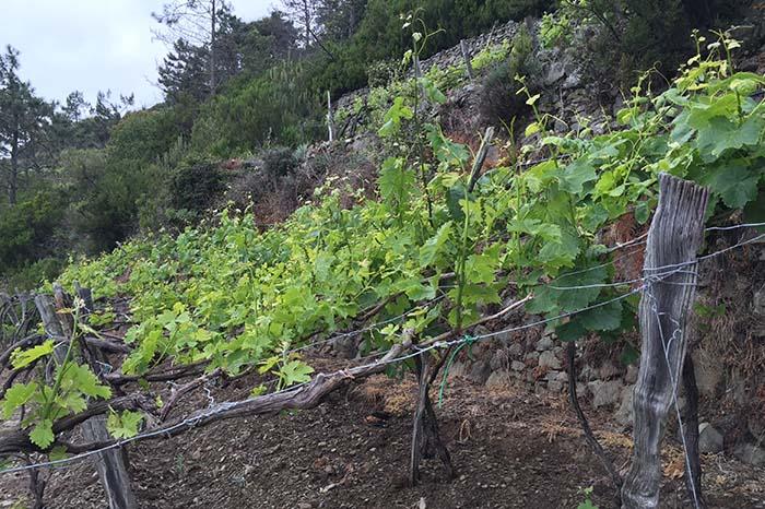 Vines & walls