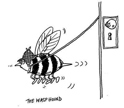 wasphound